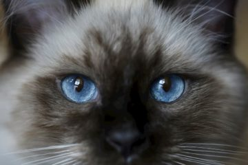 are cats color blind