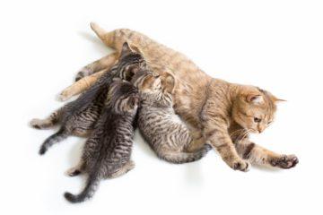 Are cats mammals?