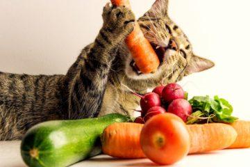 Are cats omnivores?