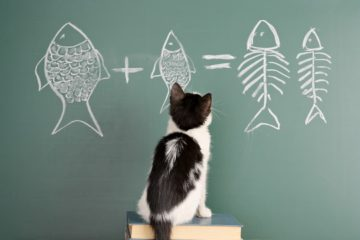 Are cats smart?