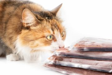 Can cats eat freeze dried food?