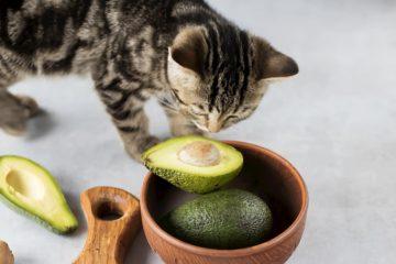 Can cats eat guacamole?