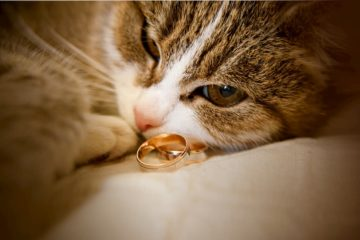 Do cats eat jewelry?