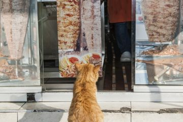 Can cats eat kebab meat?