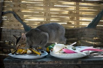 Can cats eat leftovers?