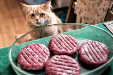Can cats eat sloppy joes?
