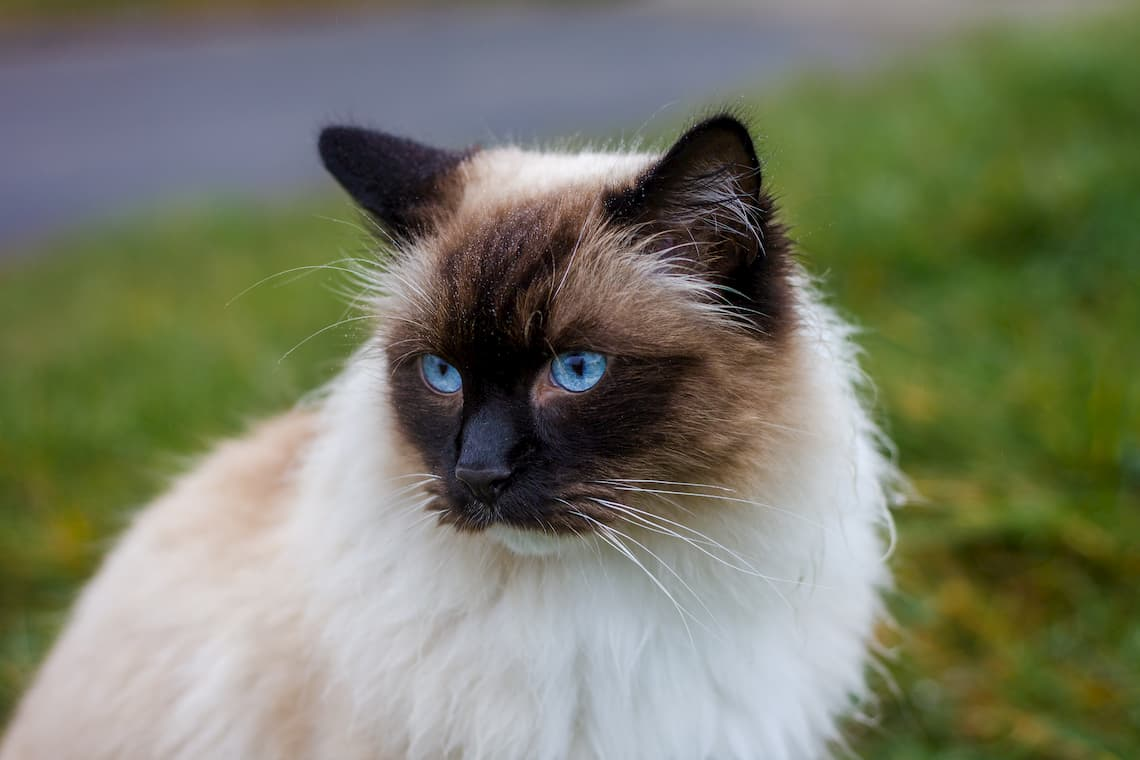 Can Indoor Cats Survive Outside Pollypets Com